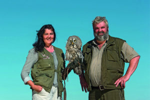 Falkner mit Greifvogel bei der Adlershow von den Störtebeker Festspielen in Ralswiek auf Rügen